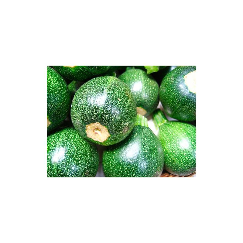 Calabacín Luna - Sobre 8 semillas