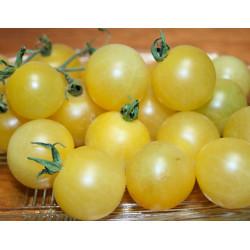 Tomate Cherry White - Sobre 35 semillas