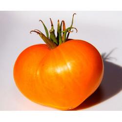 Tomate Alemán Naranja - Sobre 25 semillas