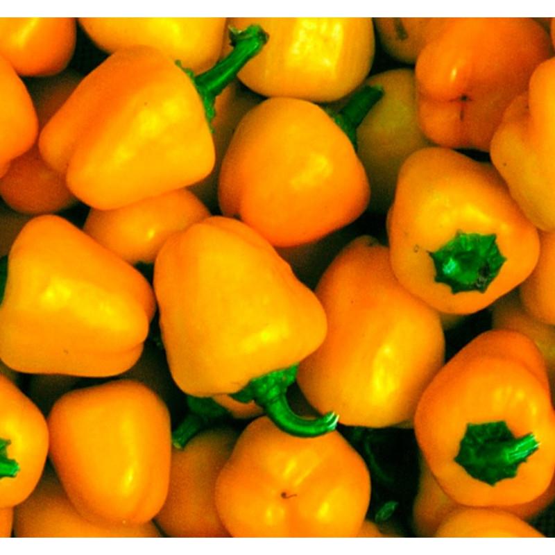Pimiento dulce Mini Bell Yellow - Sobre 20 semillas