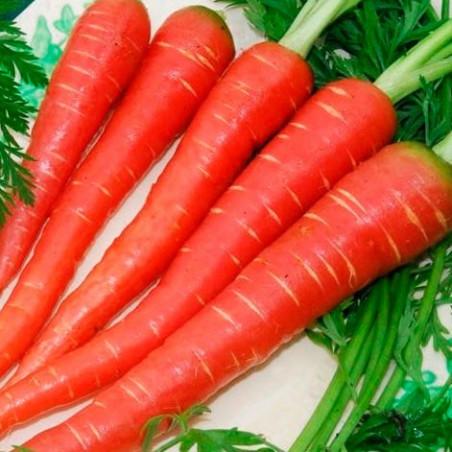Zanahoria roja 'Atomic red' - Sobre +100 semillas