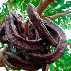 Algarrobo - Sobre 10 semillas