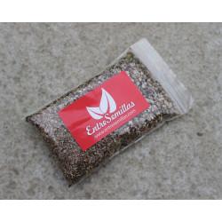 Belladona semillas estratificadas