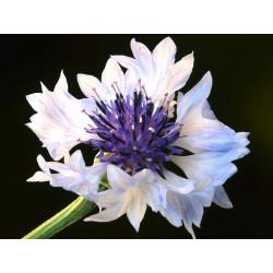 Azulejo 'Blanco' - Sobre 75...