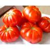 Tomate 'Costoluto Fiorentino' - Sobre 25 semillas