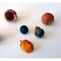 Árbol del Jabón - 3 semillas
