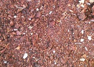 Os explicamos cómo hacer un buen sustrato para sembrar semillas. La mezcla idónea se compone de turba, corteza y perlita. Las proporciones...