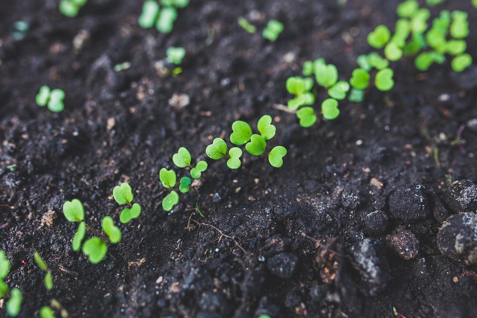 germinacion estratificacion semillas