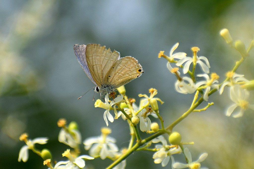 Arbol del neem