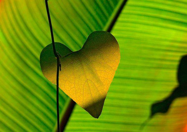 porque hojas amarillas plantas