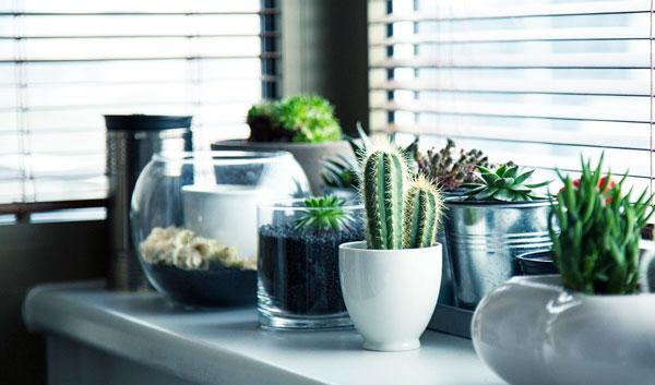 consejos plantas aire acondicionado
