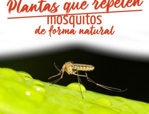 7 Plantas que repelen mosquitos de forma natural