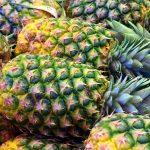 pineapple_planta_de_piña