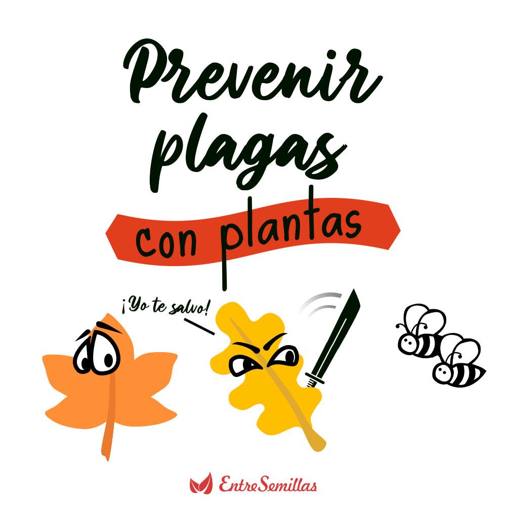 Plantas que previenen plagas