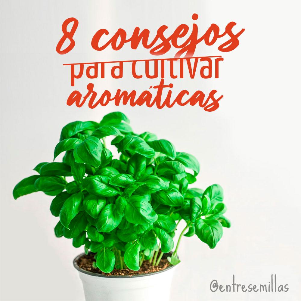 8 consejos para cultivar plantas aromáticas