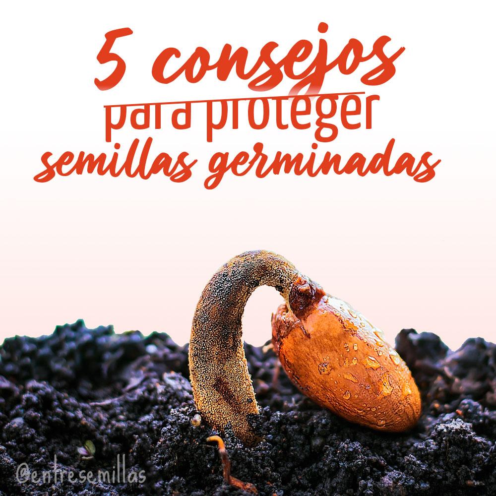 5 consejos para proteger semillas recién germinadas