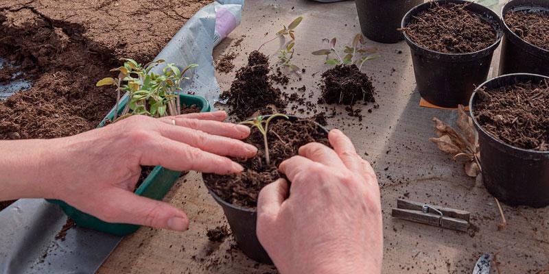 sembrando semillas en maceta
