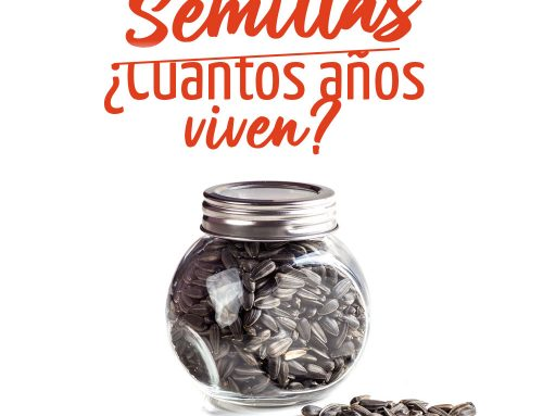 Cómo conservar semillas en casa