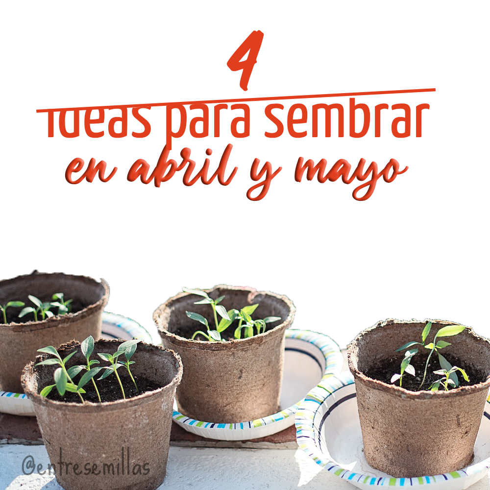 Qué sembrar en abril y mayo: 4 tipos de semillas para sembrar