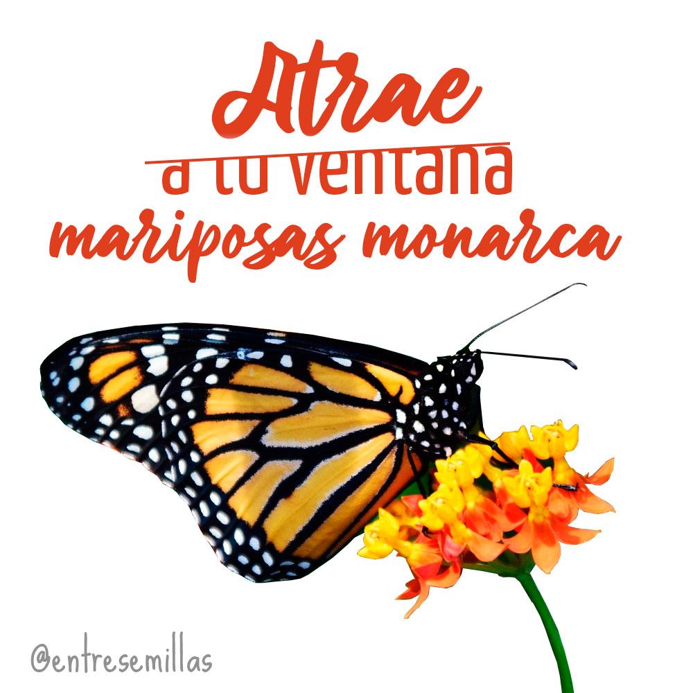¡Atrae a las mariposas con esta planta!