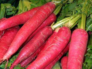 zanahoria roja atomic red semillas