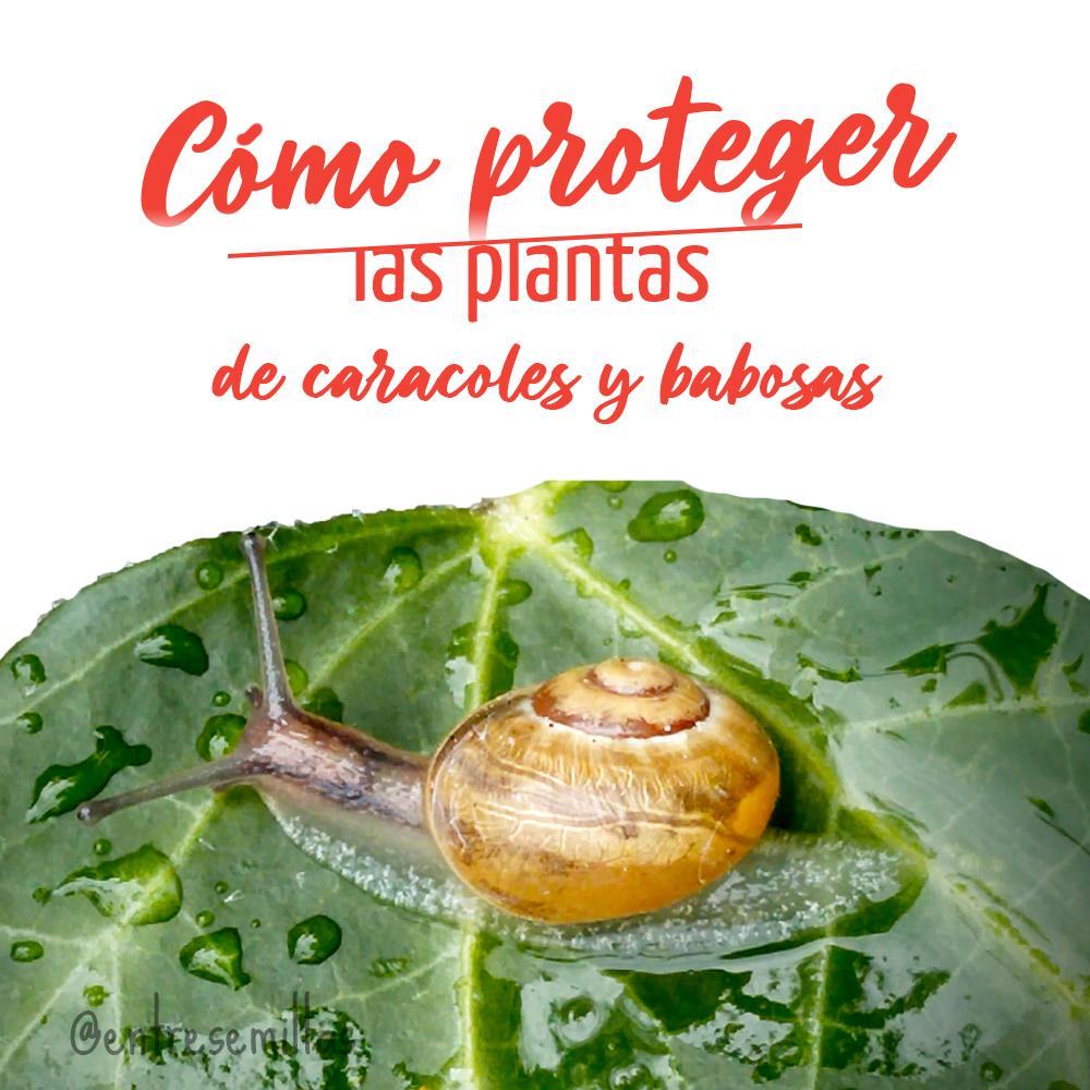 Cómo proteger las plantas de los caracoles y babosas