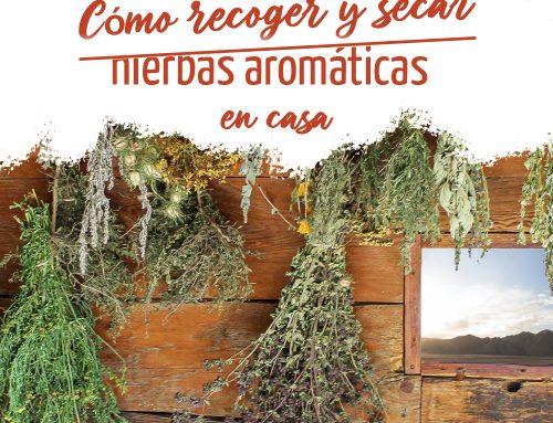 Cómo recoger y secar hierbas aromáticas en casa