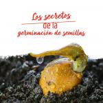 cómo germinar germinación de semillas