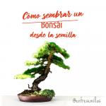 cómo sembrar un bonsái desde la semilla