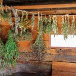 secar hierbas aromáticas en casa-2