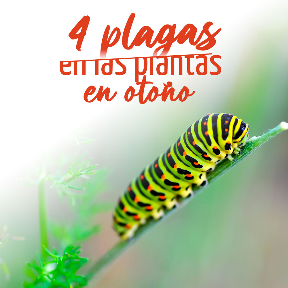 4 Plagas y enfermedades de las plantas en otoño