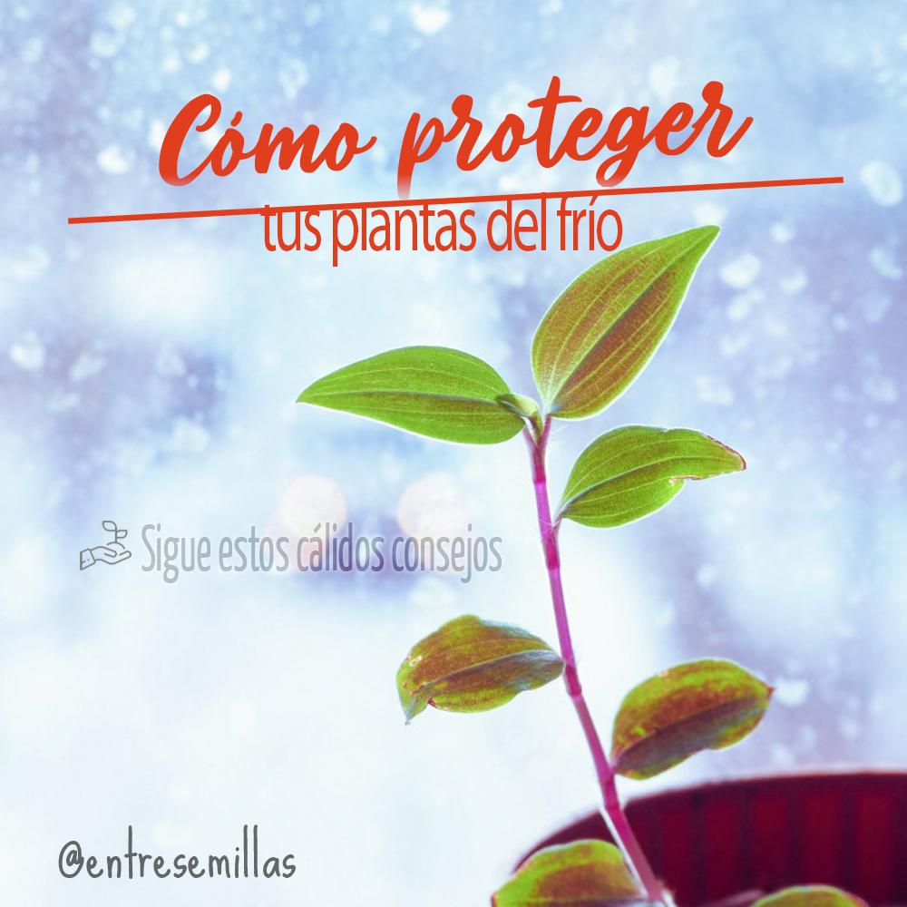 Cómo proteger tus plantas del frío_IG_21.12.20