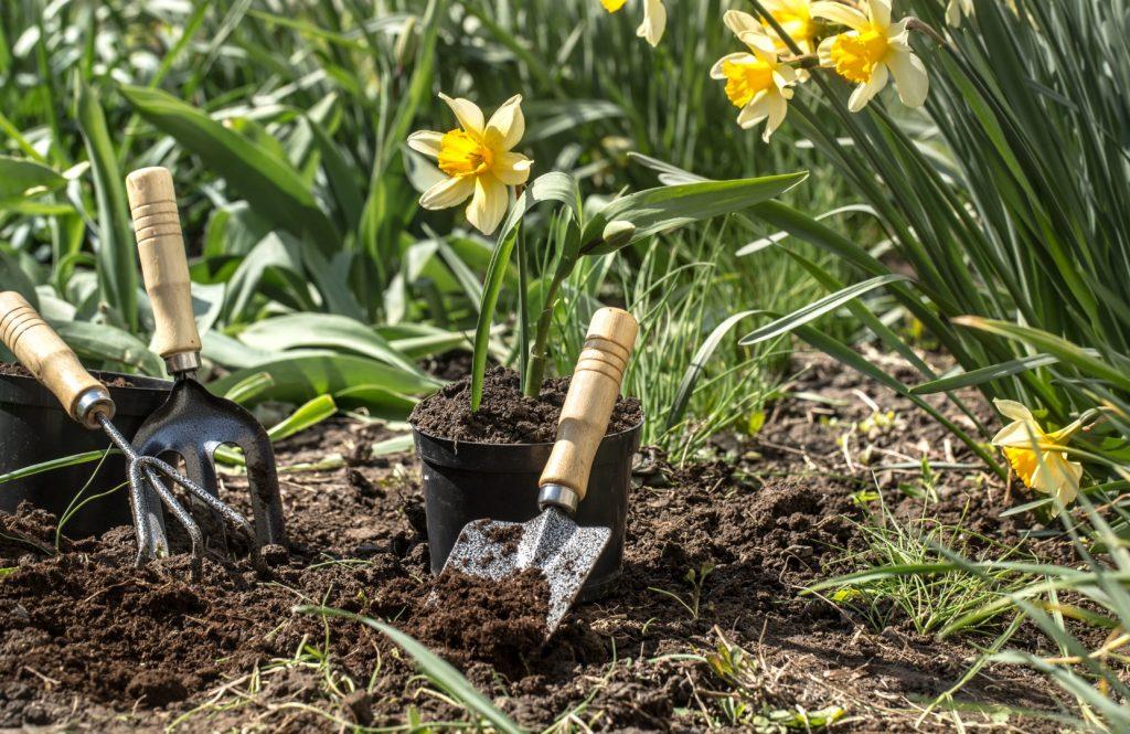 Plantas perennes con flores