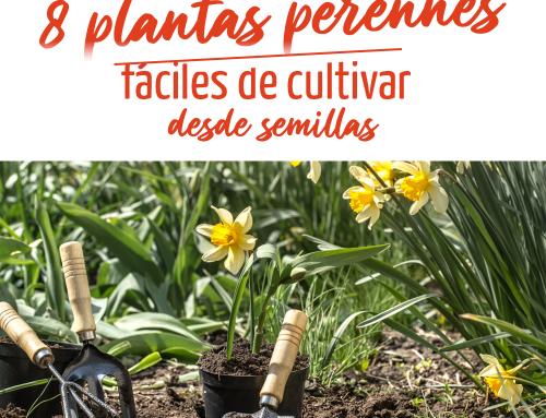 8 plantas perennes fáciles de cultivar a partir de semillas