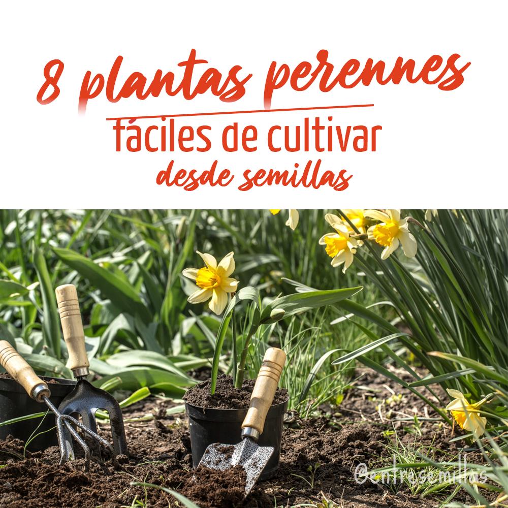 8 plantas perennes fáciles de cultivar desde semillas