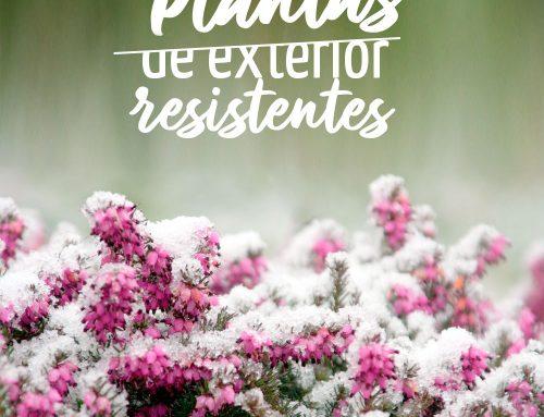 Plantas de exterior resistentes al frío y al calor