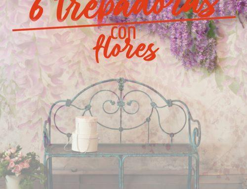 6 Plantas trepadoras con flores que alegrarán tus jardines