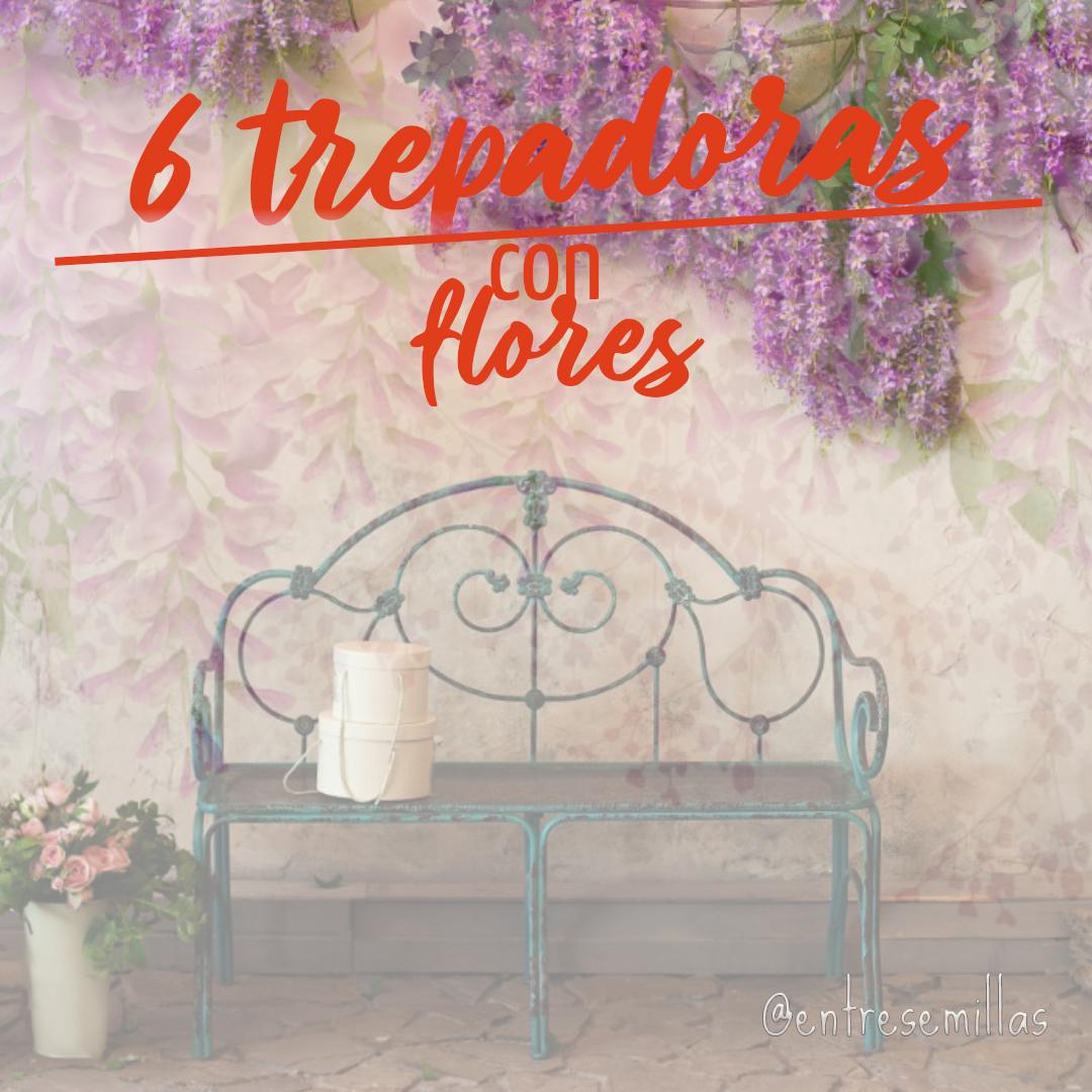 6 trepadoras con flores