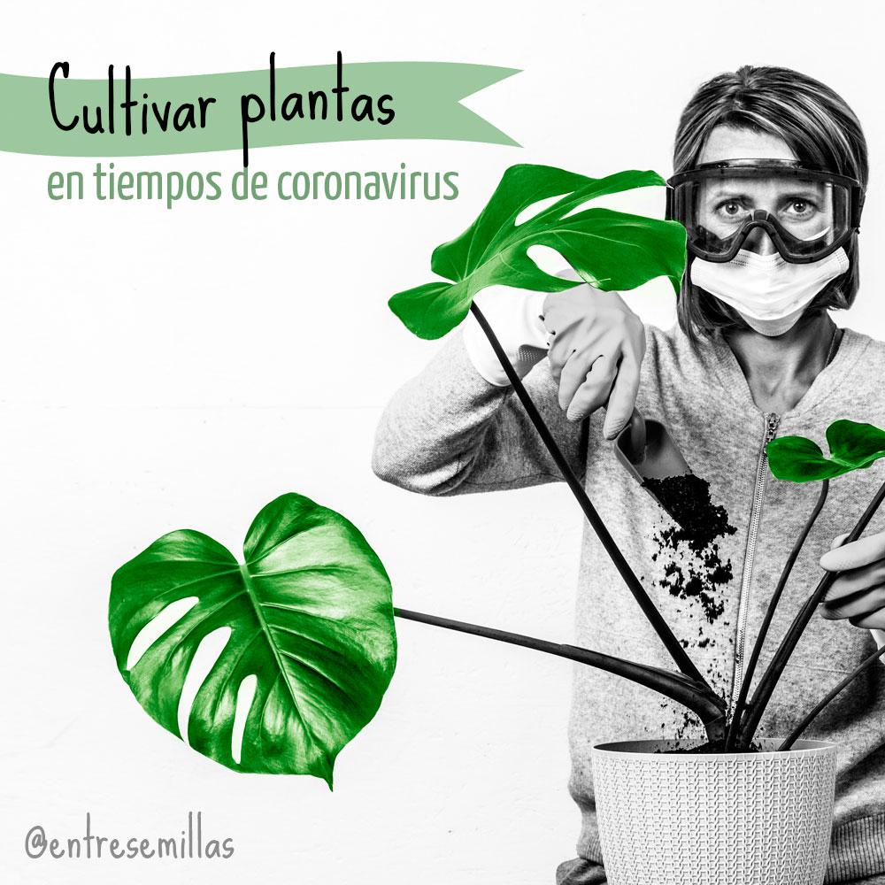 Los beneficios garantizados de cultivar plantas este año