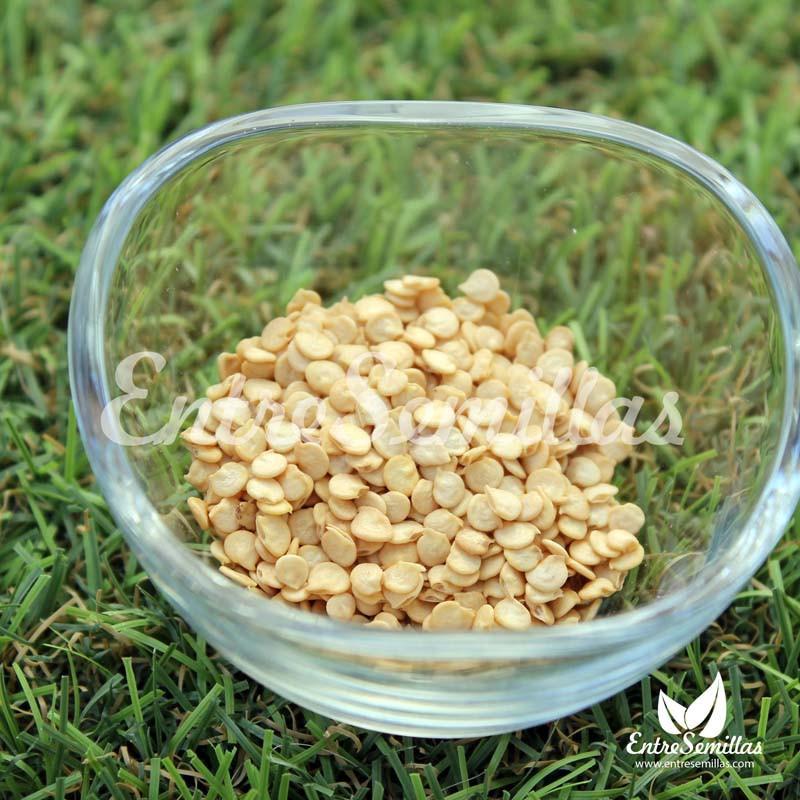 semillas pimientos