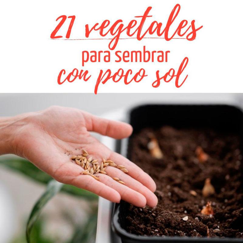 vegetales para sembrar con poco sol
