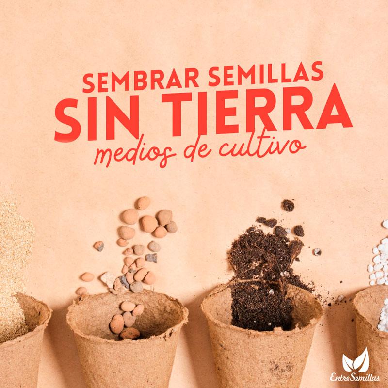 sembrar semillas sin tierra