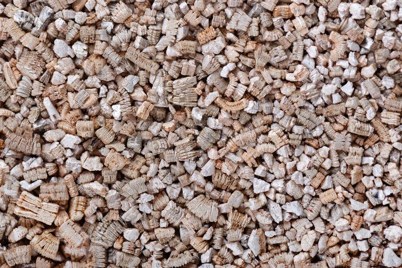Sembrar semillas en vermiculita
