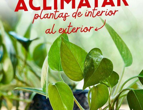 Aclimatar plantas de interior al exterior