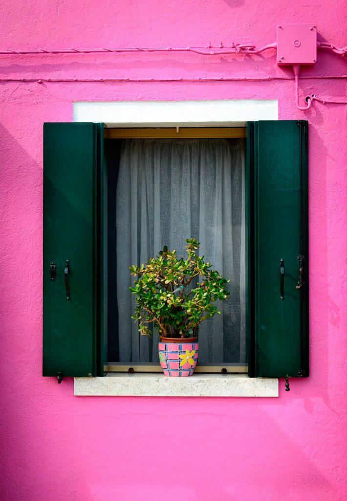 ventana con planta