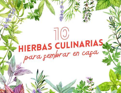 Las 10 mejores hierbas culinarias para sembrar en casa