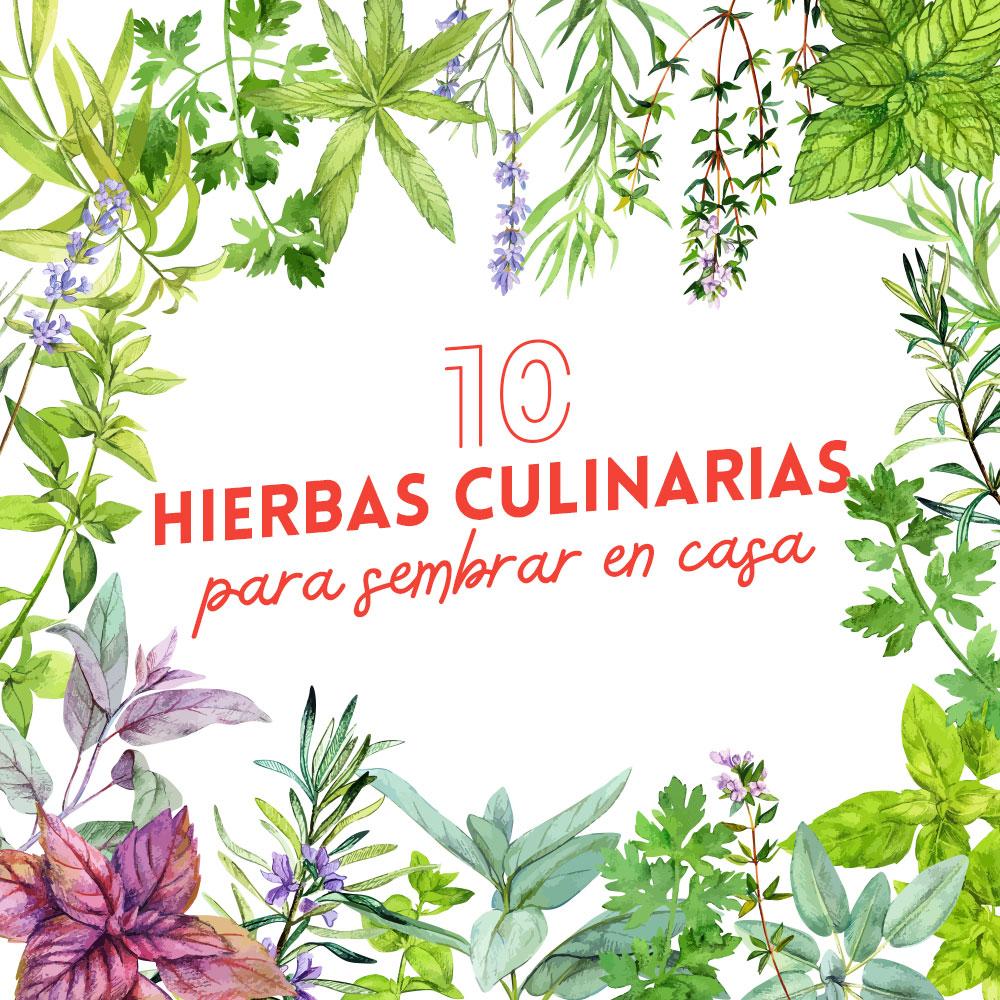 hierbas culinarias para sembrar en casa