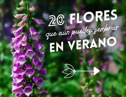 Semillas de flores que aún puedes sembrar en verano