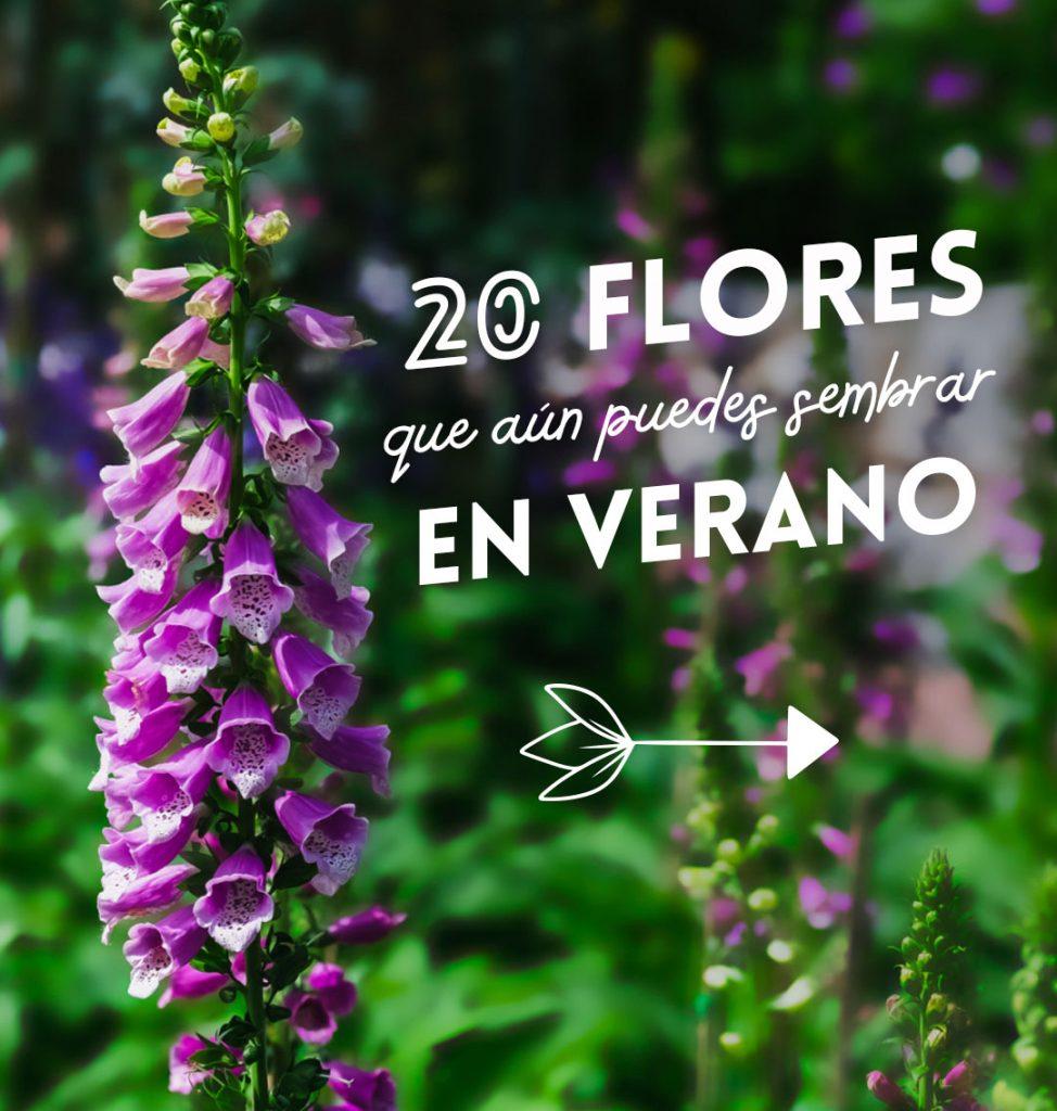 semillas de flores que sembrar en verano
