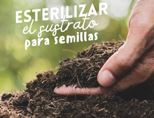 Esterilizar el sustrato para semillas o la tierra para macetas